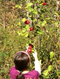 girl apple picking